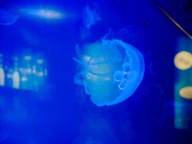 Jelly fish at ZSL