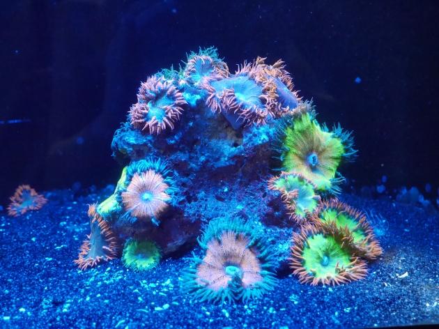 Coral at ZSL