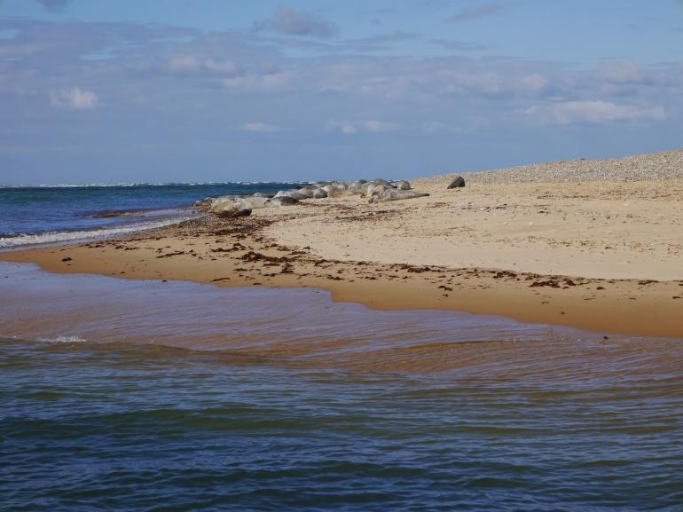 Seals on Blakeney Point