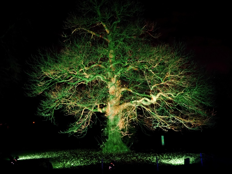 Illuminated Tree at Kew Gardens