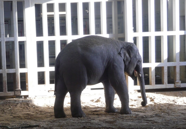 Baby Elephant at Dublin Zoo