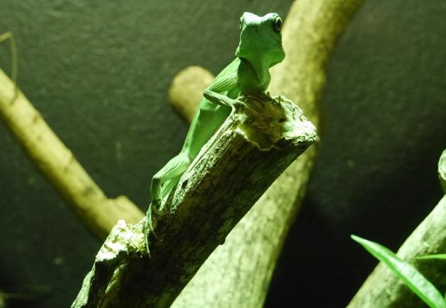 Lizard at Dublin Zoo